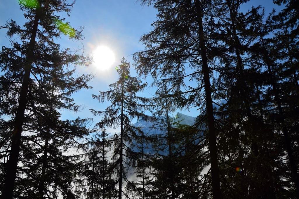 Durch den Wald zur Halsalm