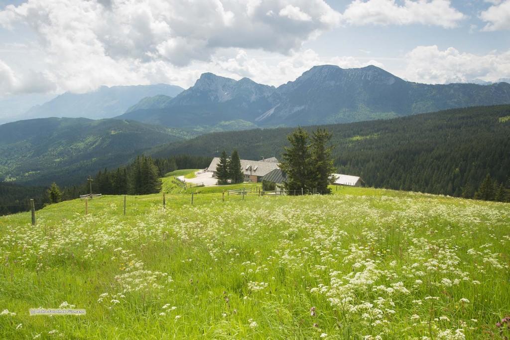 """blühender Frühling auf der Stoißeralm auf dem Teisenberg (1334m) mit Hochstaufen und Zwiesel, Berchtesgaden Alpen (Bayern, Oberbayern, Berchtesgadener Land, Deutschland), ein """"Magnet"""" für Wanderer und Mountainbiker"""
