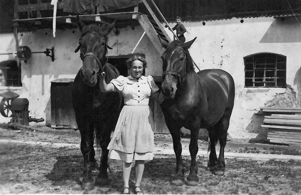 vermutlich 1950: Pferde am Pfaffenlehen