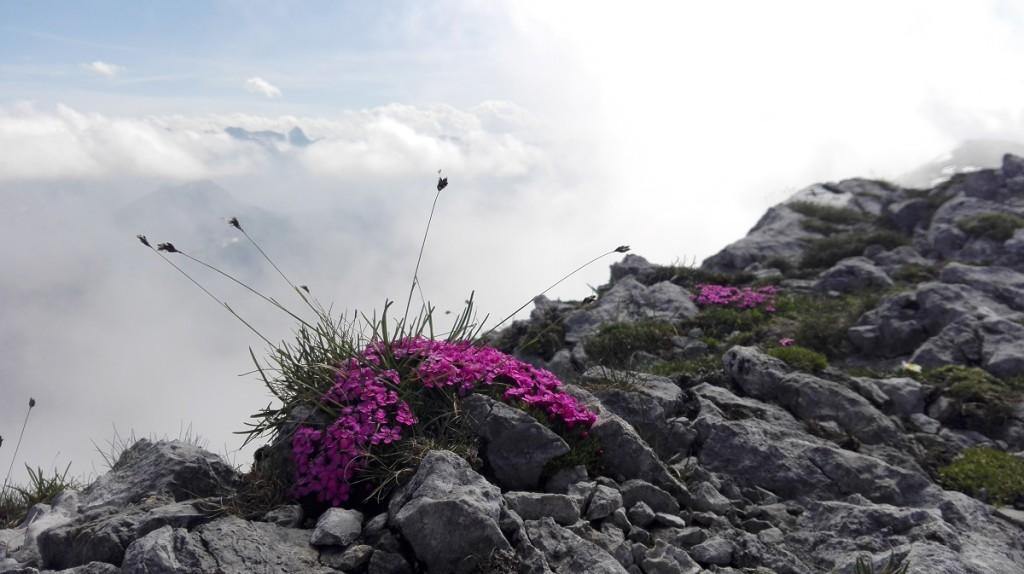 Farbtupfer am Hohen Brett, hinten ragt die Schönfeldspitze aus dem Wolkenmeer