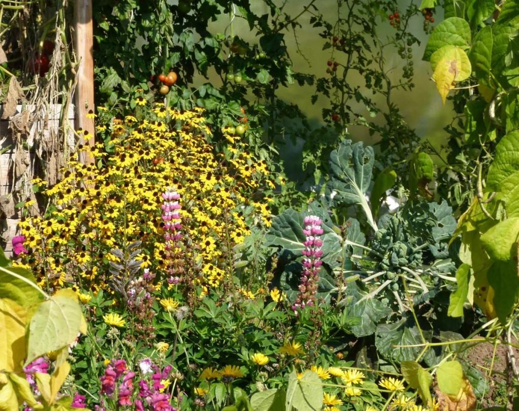 Garten der Familie Pfnür vom Garten-bauverein Schönau
