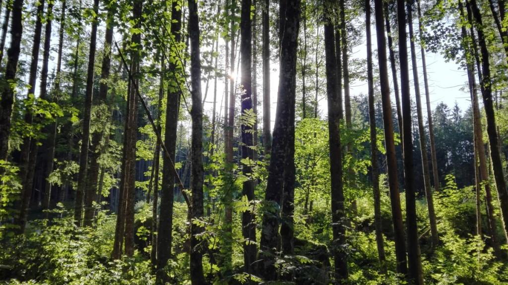 Sonnenstrahlen durchbrechen den Zauberwald und...