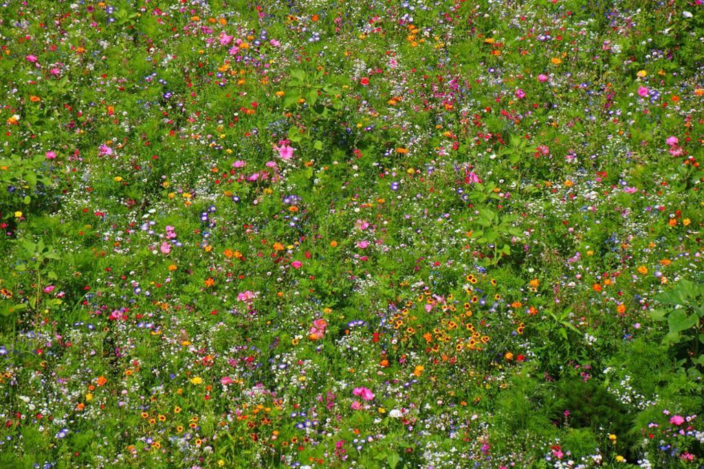 ökologisch wertvoll: Blumenwiese in der Alpenstadt