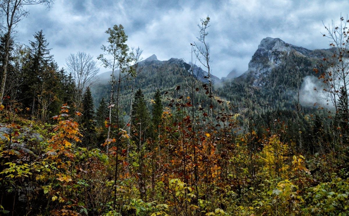 Herbstwald am Hintersee mit Blick zum Hochkalter