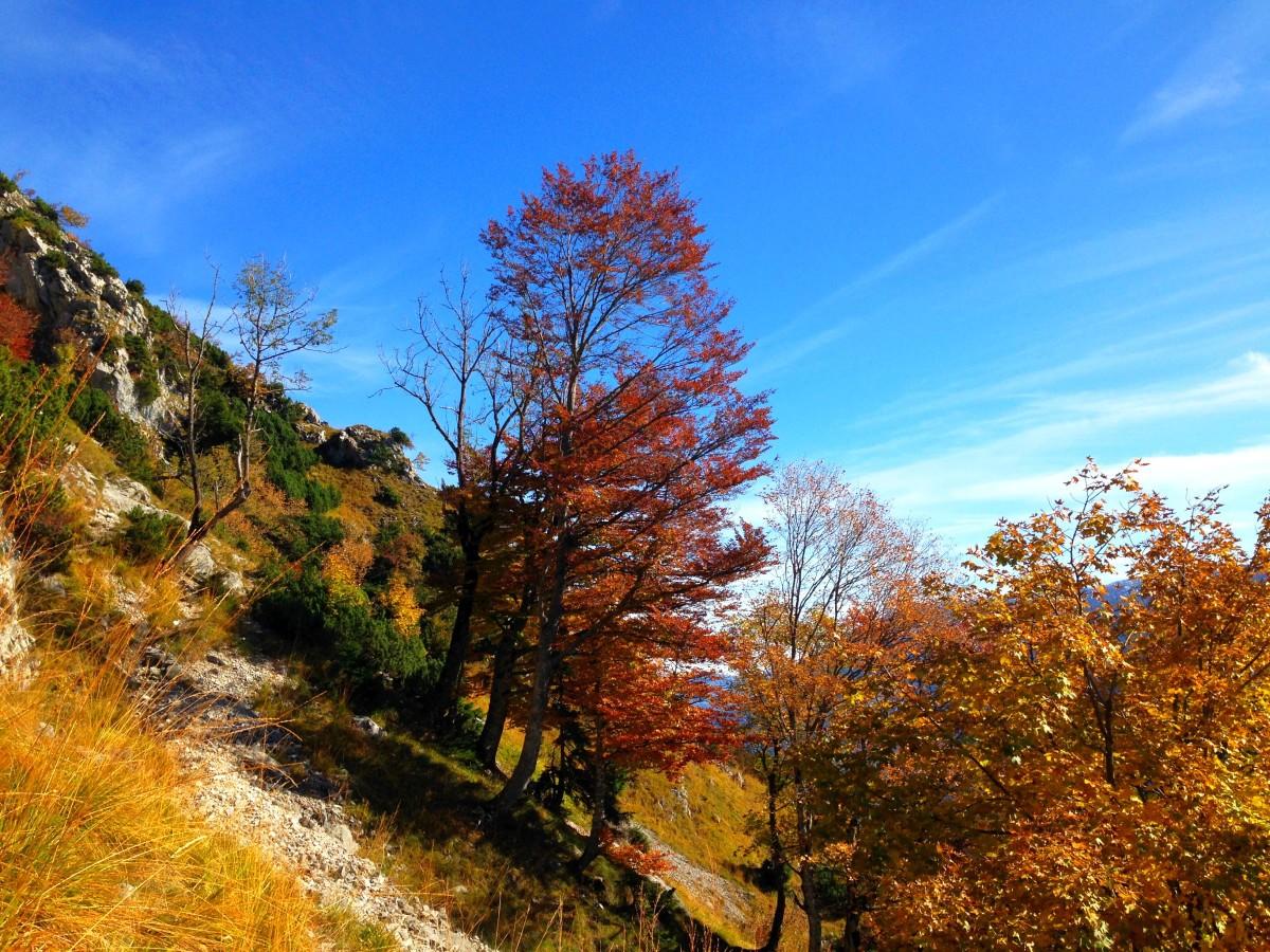 Herbstliche Stimmung auf dem Weg zur Goldtropfwand