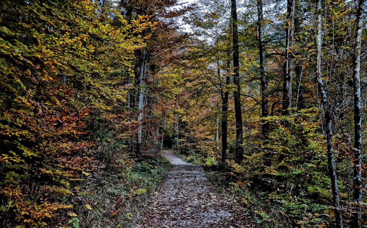 Der Malerwinkelrundweg durch den Herbstwald