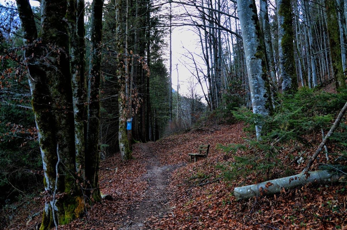 Wanderweg oberhalb der Ramsau