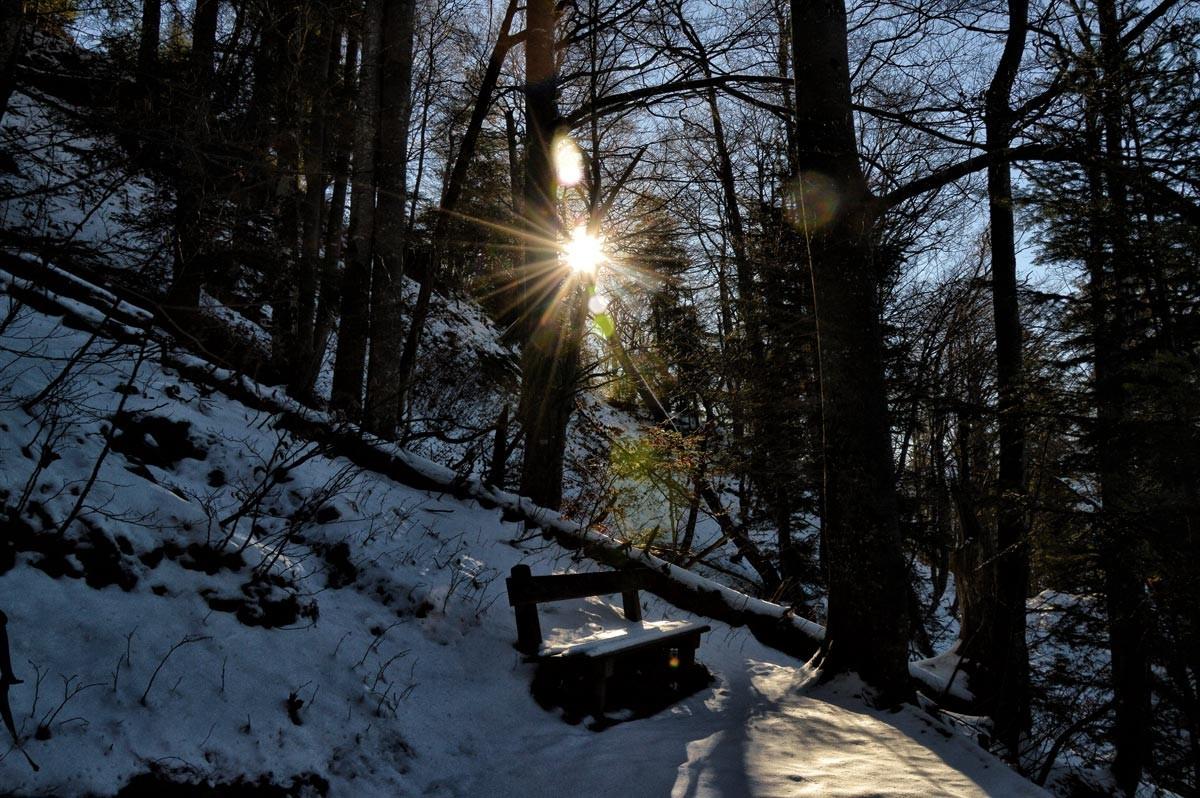 Der Weg führt durch teilweise verschneiten Wald