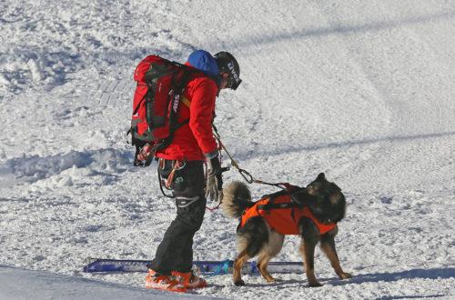 Lawinenhund Ausbildung auf der Reiter Alm