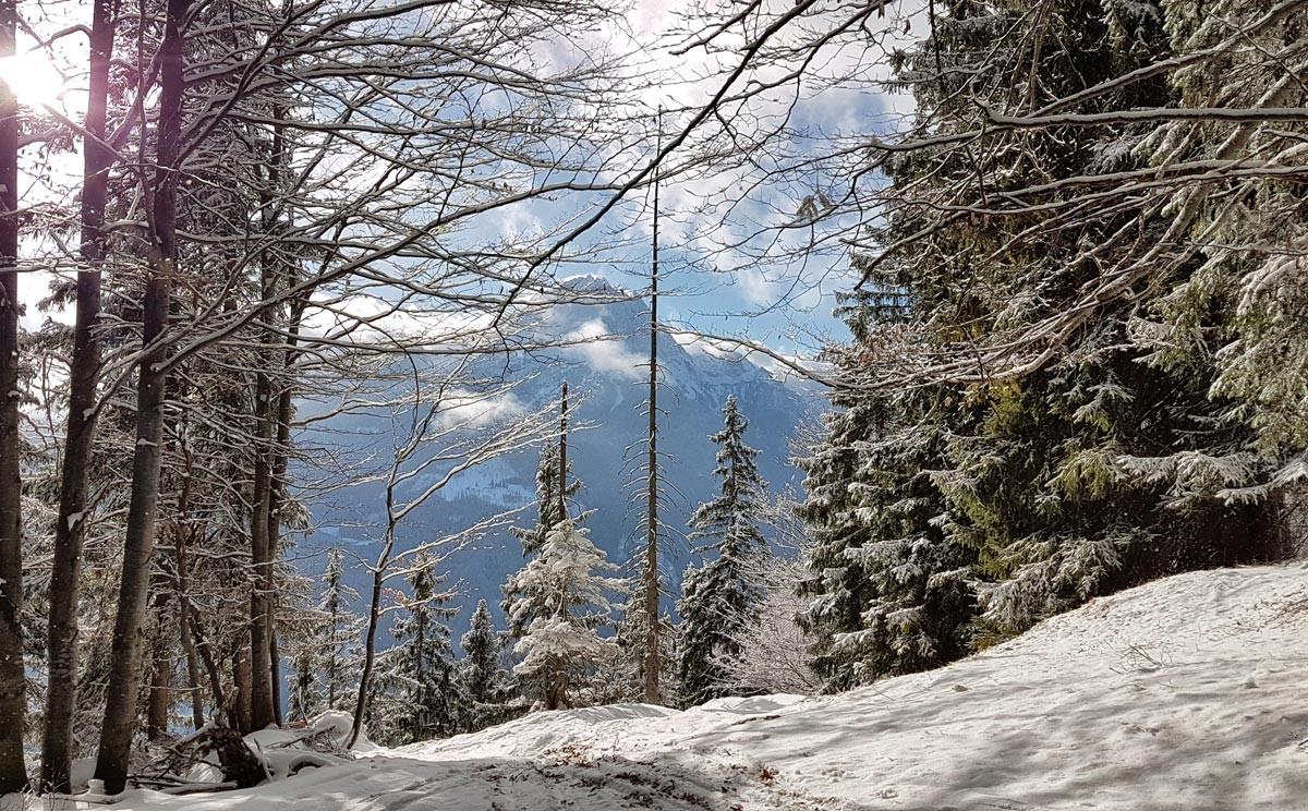 Blick durch den Wald zum Watzmann