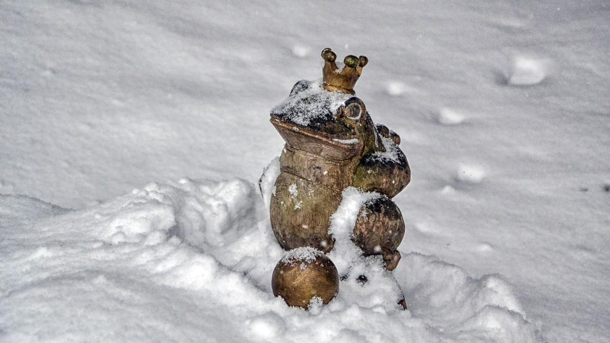 Der Froschkönig am Märchenpfad Bischofswiesen