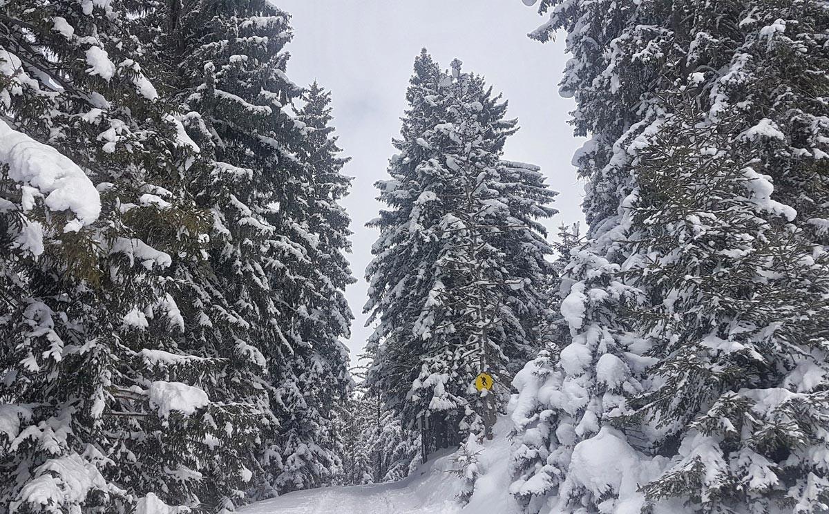 Aufsiegsspur durch den tiefverschneiten Wald