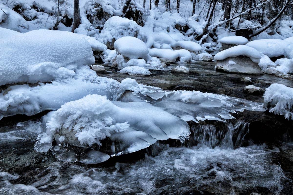 Eis im Zauberwald