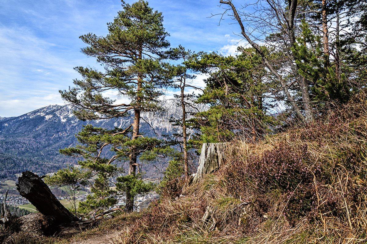 Frühlingswandern in den Wäldern oberhalb Bad Reichenhalls
