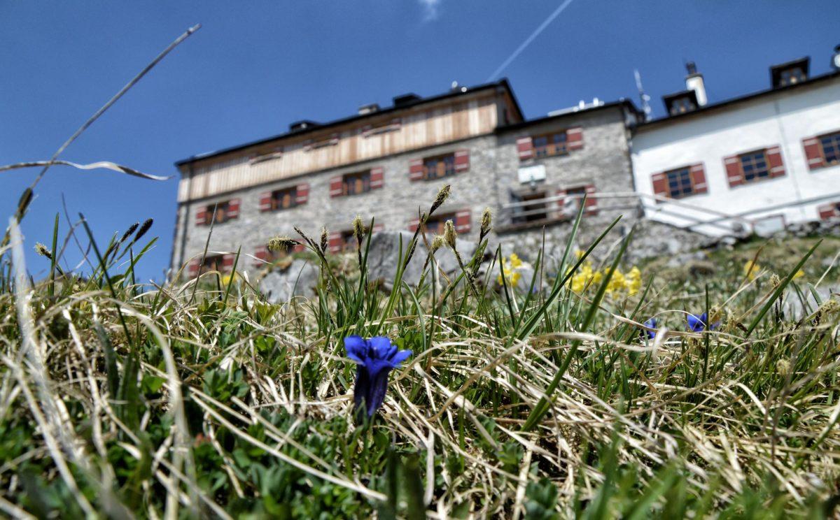 Blau blüht der Enzian am Watzmannhaus