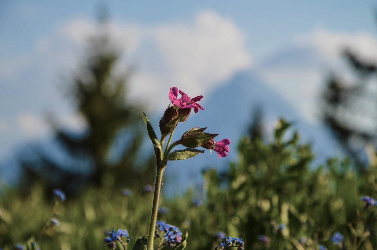 Frühlingsblumen auf der Kneifelspitze