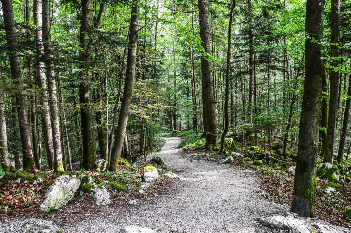 Wanderweg zum Kälbersteinkopf