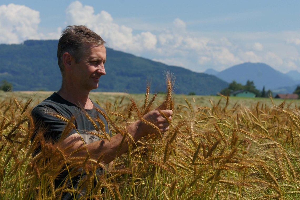 Bio-Landwirt Manfred Eisl inmitten seines Laufener Landweizen-Feldes