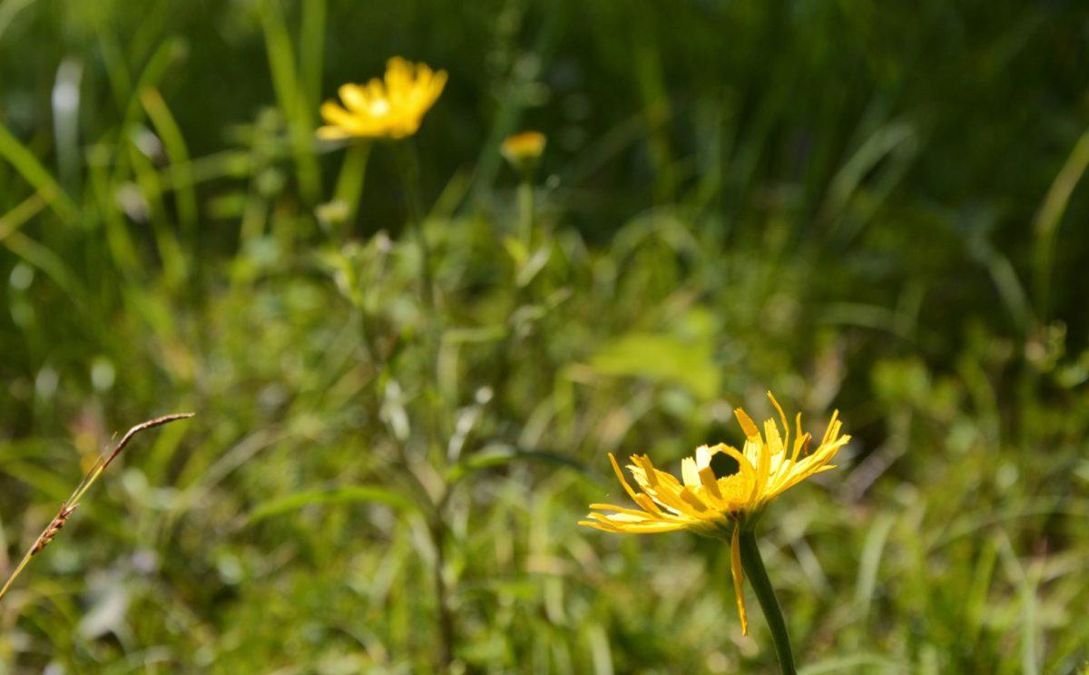 Blumen im Lattengebirge