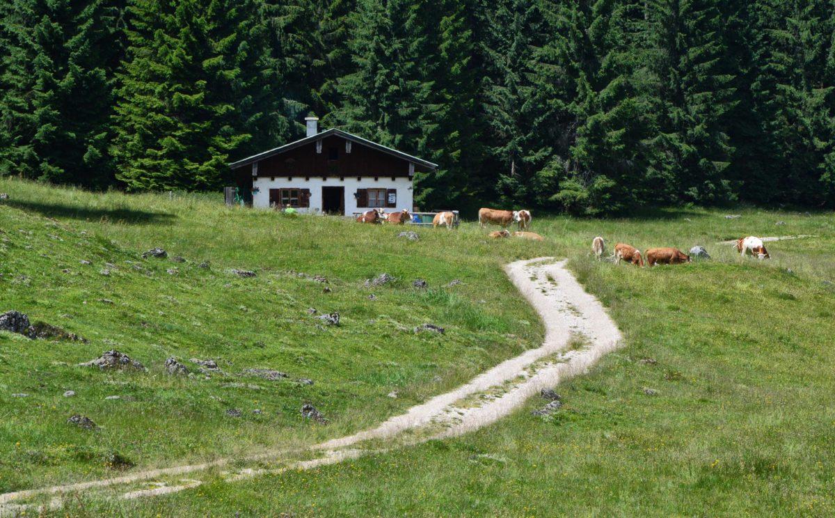 Kühe vorm Eggler-Kaser auf der Anthaupten