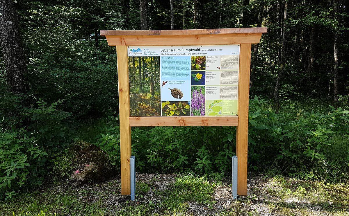 Lebensraum Sumpfwald am Natur-Erlebnisweg Bischofswiesen