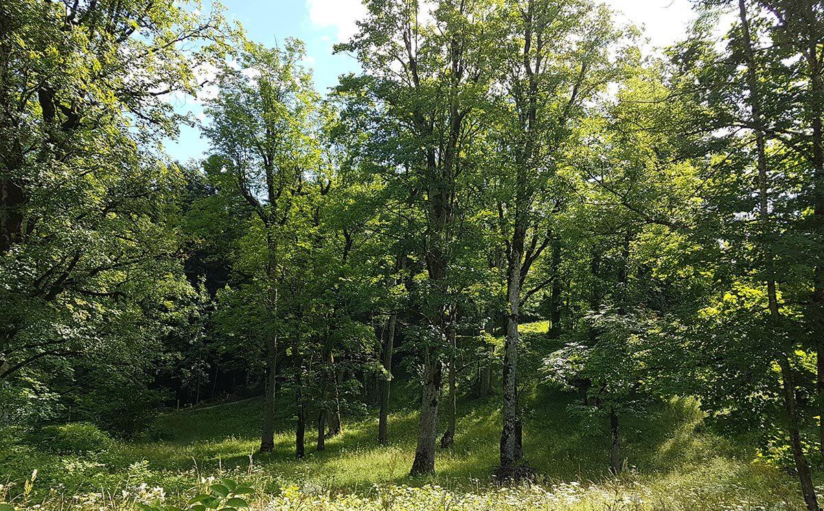 Tratte mit lockerem Baumbestand