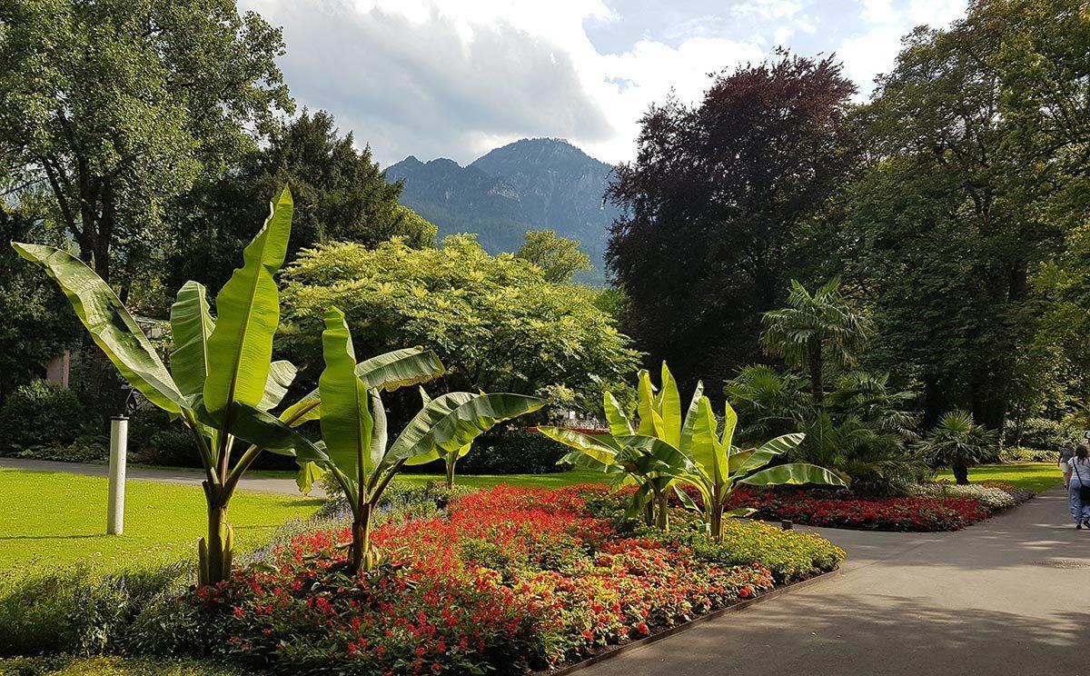 Karibik trifft Alpen: Bananenbäume vor dem Predigtstuhl