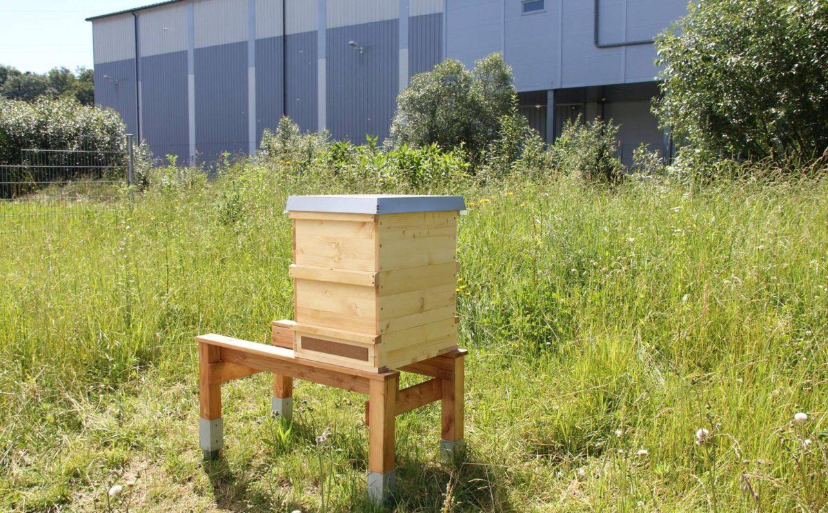 Bienenkasten auf dem Gelände der Molkerei Berchtesgadener Land