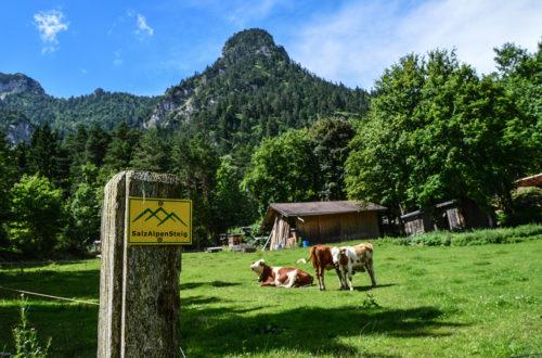 SAlzAlpenSteig: Etappe 7 in Bischofswiesen