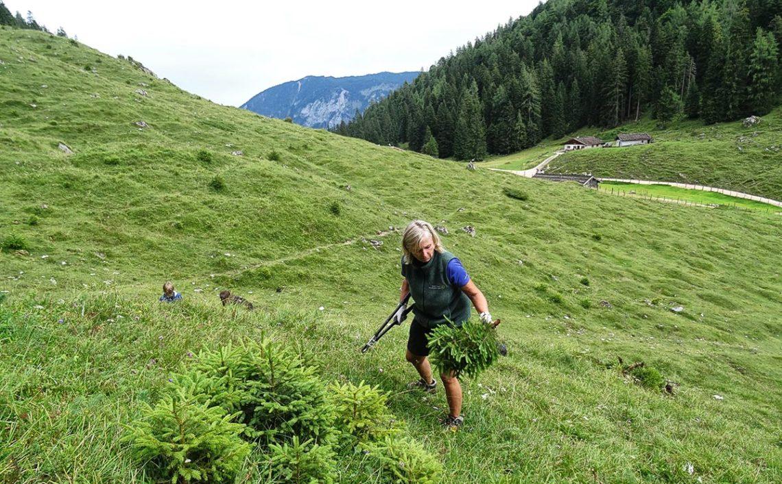 Schwenden auf der Mordaualm © Biosphärenregion Berchtesgadener Land