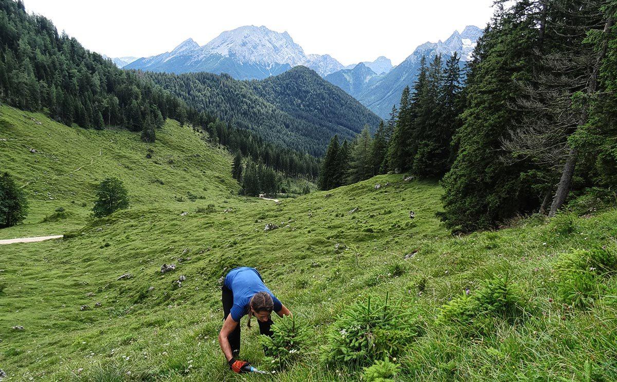 Almputzen auf der Mordaualm – Schwendaktion © Biosphärenregion Berchtesgadener Land