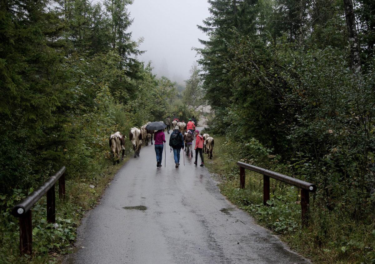 Im Regen durchs Klausbachtal