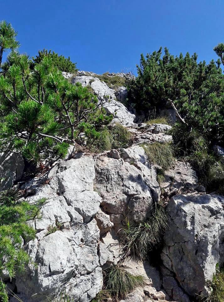 Kletterstellen auf den letzten Metern zum Signalkopf