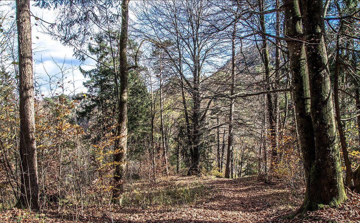 Herbstwald bei Marktschellenberg