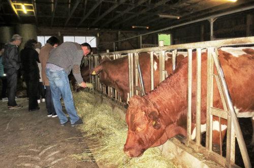 Im Stall gegenüber konnten die Teilnehmenden sehen, woher das Fleisch stammt.