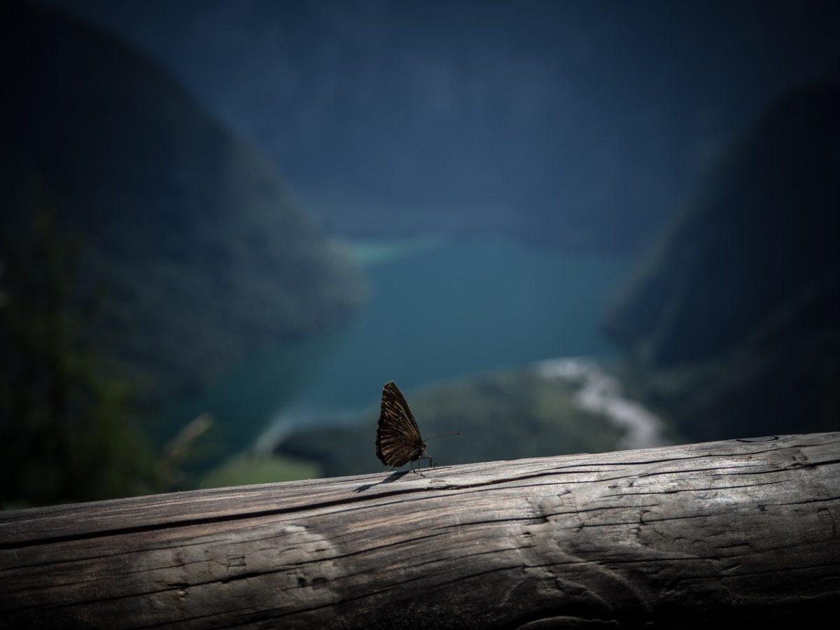 Ein Schmetterling an der Archenkanzel