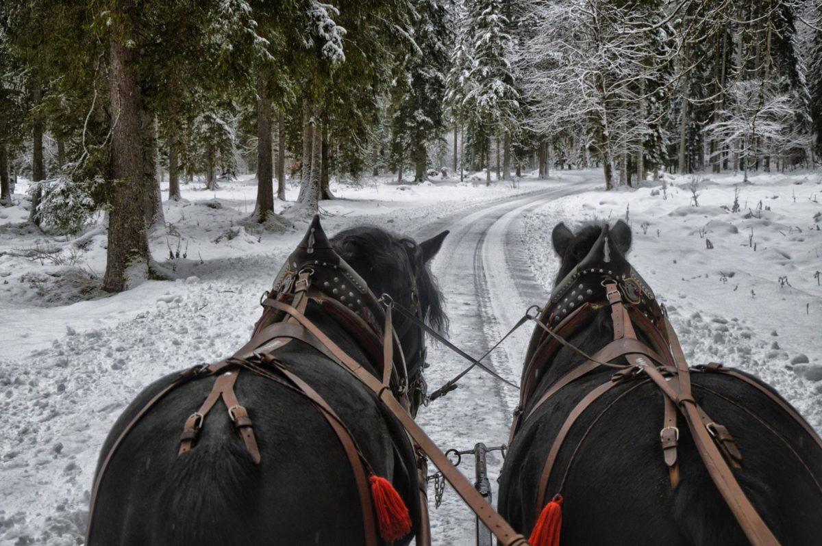 Pferdekutschfahrt im Klausbachtal