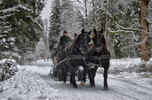 Mit dem Pferdeschlitten im Klausbachtal
