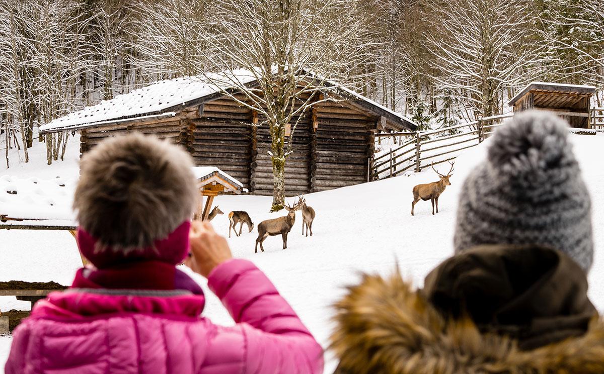 Aussichtsplattform an der Wildfütterung im Klausbachtal © Nina Schlesener