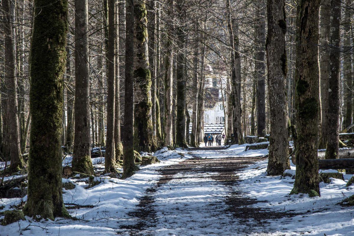 Rückweg durch den Wald