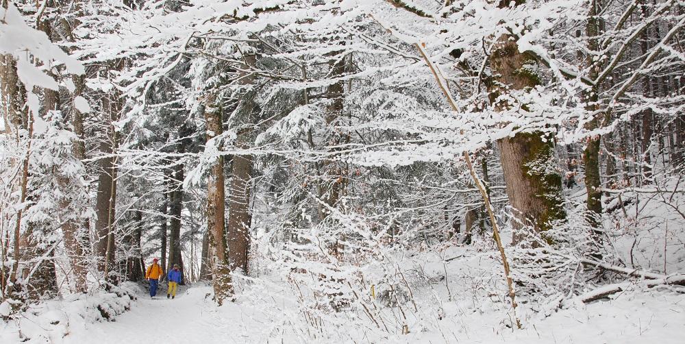 Winterwald in Bischofswiesen