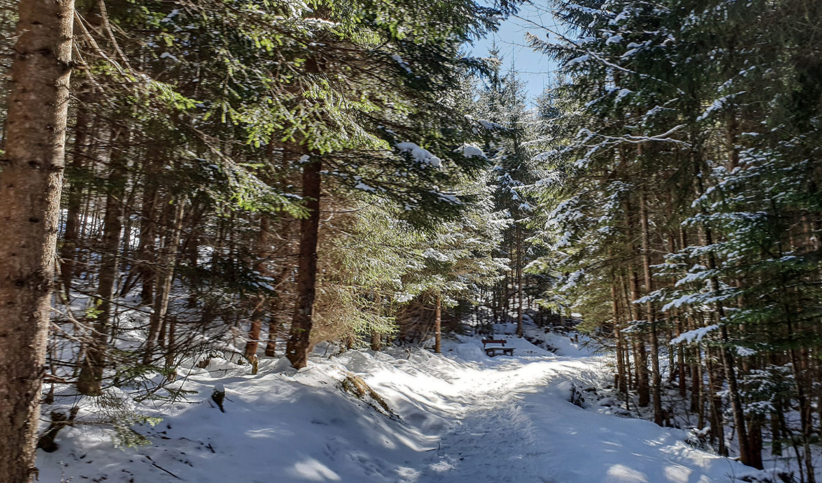 Der Carl von Linde Weg am Obersalzberg