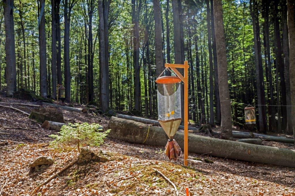 Versuchsfläche im Nationalpark, auf der auch totholzbewohnende Insekten untersucht werden © Bernhard Huber