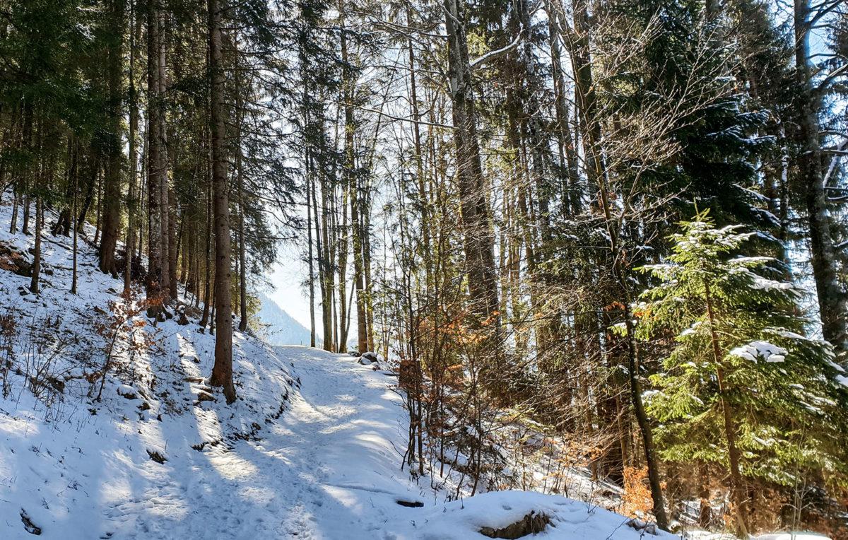 Der winterliche Linde Weg am Obersalzberg