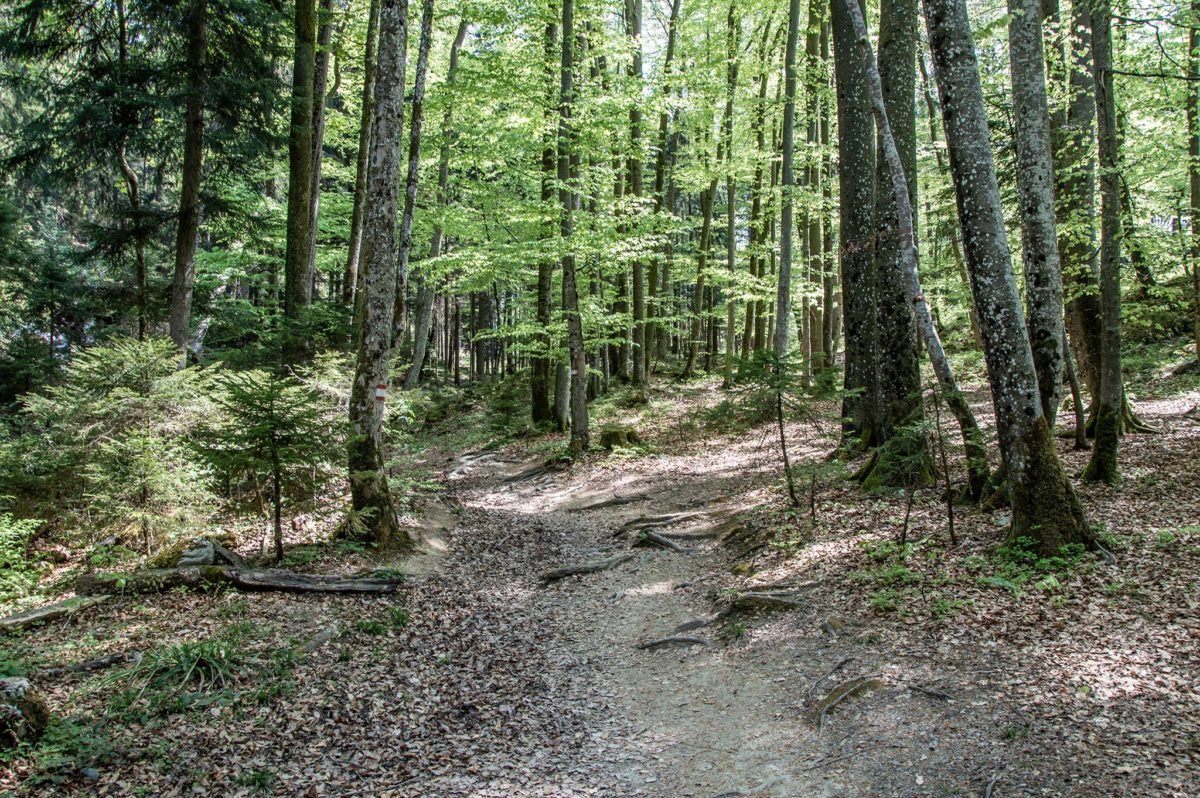 Durch den Wald von der Ruine Türndl zu den Barmsteinen