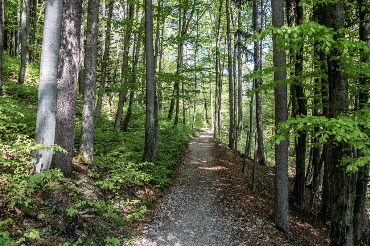 Wanderweg durch den Wald zu den Barmsteinen