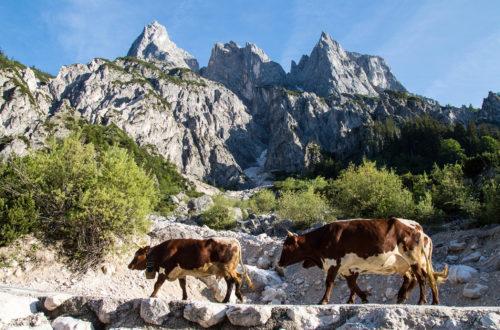 Die schroffen Mühlsturzhörner | Ramsauer Dolomiten