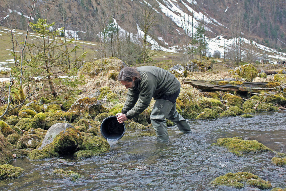 Dr. Ulrich Wunner (l.), Fischereifachberater des Bezirks Oberbayern und Nationalpark-Ranger Klaus Melde (Mitte) bringen 10.000 Seeforellen-Brütlinge in den 2011 aufwändig renaturierten Saletbach ein. Die Aktion wurde von einem Team des Bayerischen Rundfunks begleitet.