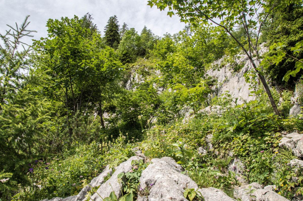 Wald und Felsgelände