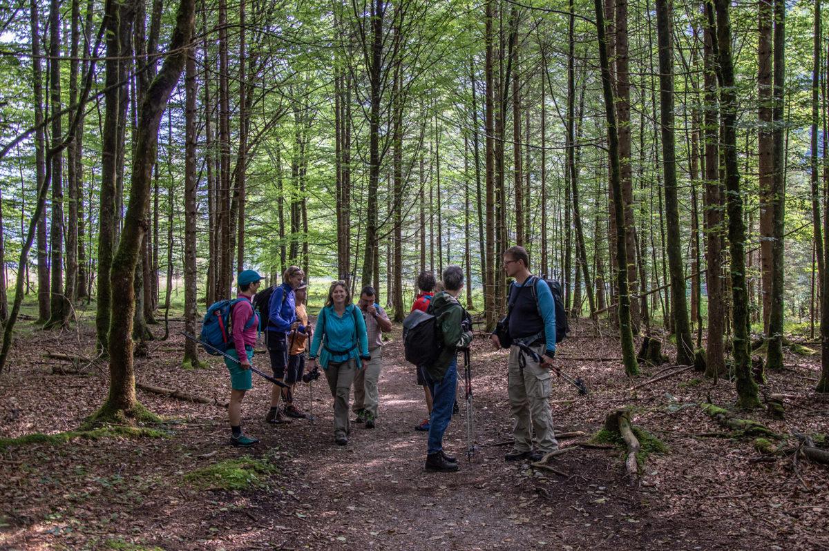 Durch den Wald in Richtung Eisbach